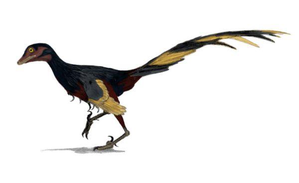 Palaeos Vertebrates: Coelurosauria: Troodontidae.