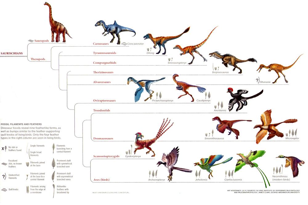 Coelurosauria.