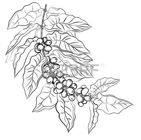 Image result for coffee leaf drawing in 2019.