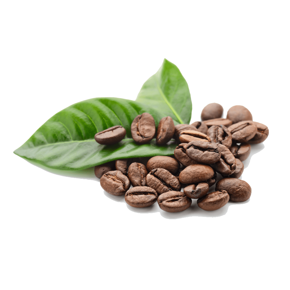 coffee leaf png 20 free Cliparts | Download images on Clipground 2021