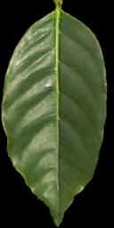 Hawaiian Plant Textures.