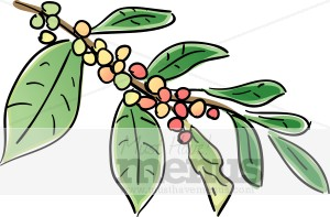 Coffee Plant Clipart.