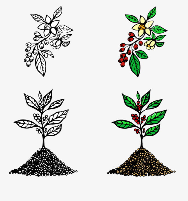 Cartoon coffee tree seconds material PNG clipart.