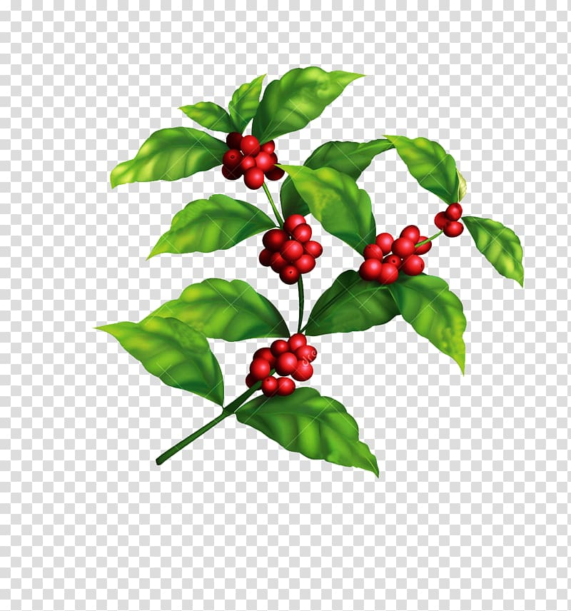 Red fruit lot with green leaf illustration, Arabica coffee.