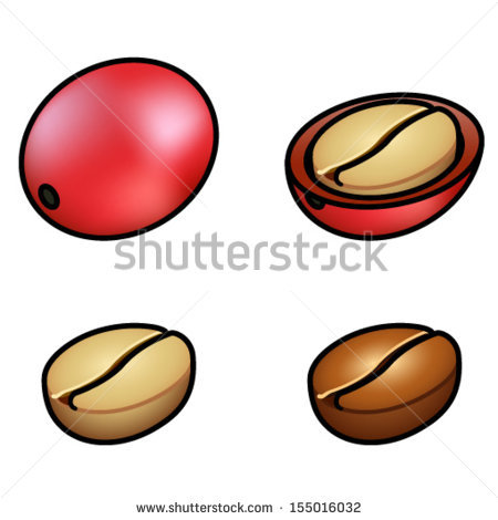 Whole Coffee Berry Cutopen Berry Raw Stock Vector 155016032.