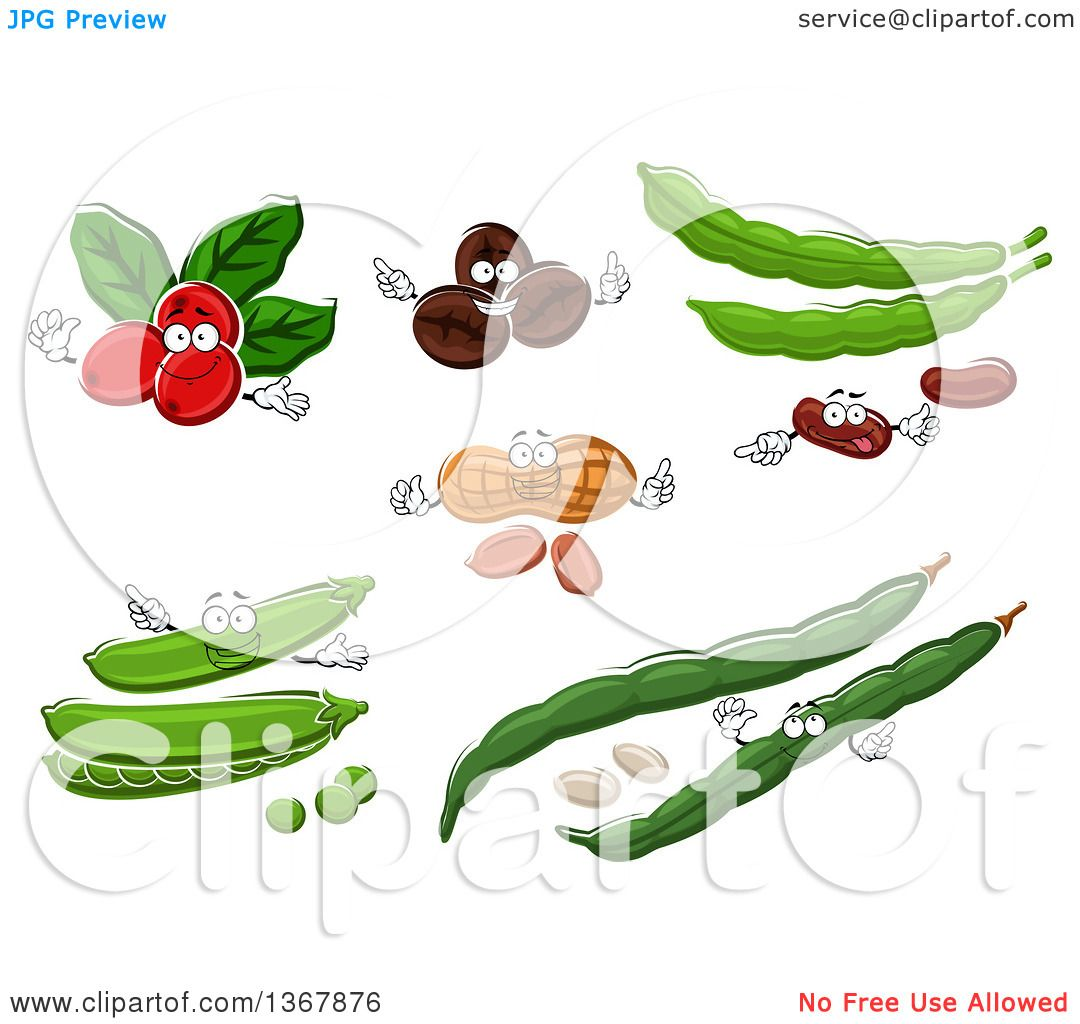 Clipart of Coffee Berry, Coffee Bean, Peanut and Beans.