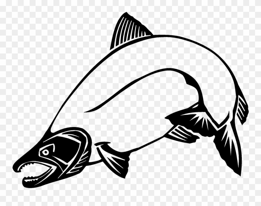Attractive Salmon Clip Art Chinook Other 1000 744 Transprent.