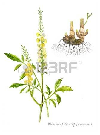 829 Herbal Remedy Stock Illustrations, Cliparts And Royalty Free.