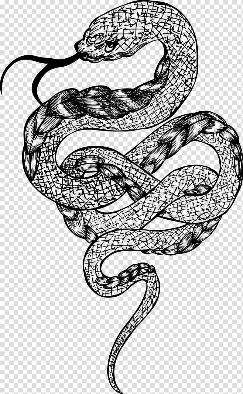 Snake illustration, Rattlesnake Boa constrictor, Coiled.