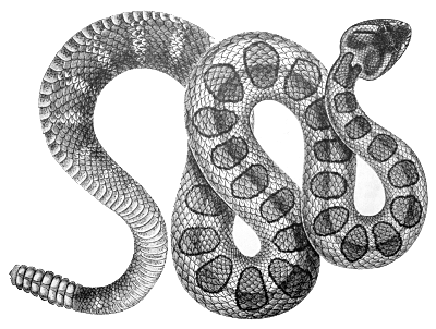 Free Rattlesnakes Cliparts, Download Free Clip Art, Free.
