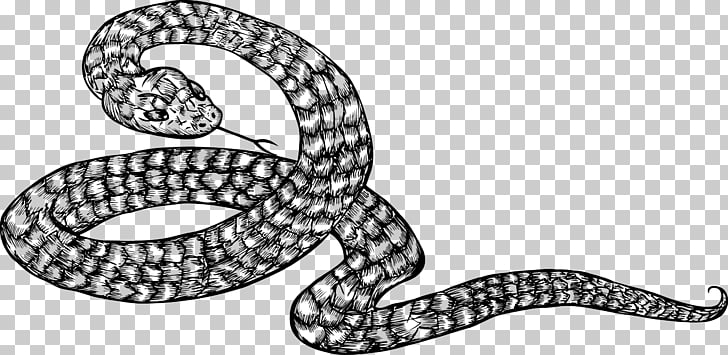 Kingsnakes Black and white Illustration, Coiled snake PNG.