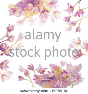 Colchicum Stock Photos & Colchicum Stock Images.