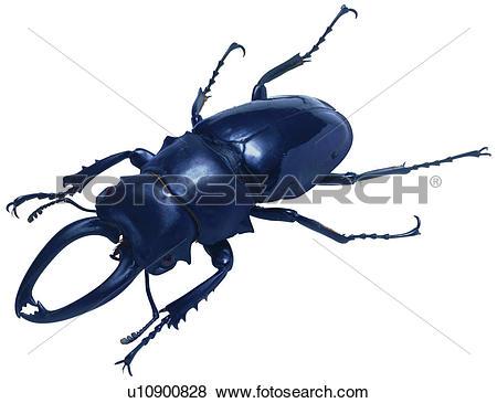 Coleoptera Stock Photo Images. 4,318 coleoptera royalty free.