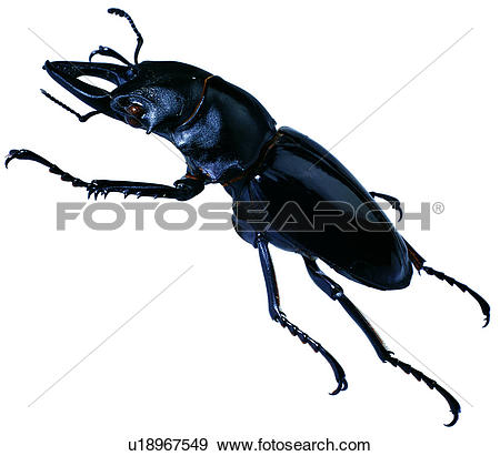 Stock Photograph of coleoptera, insect, specimen, bugs, insects.