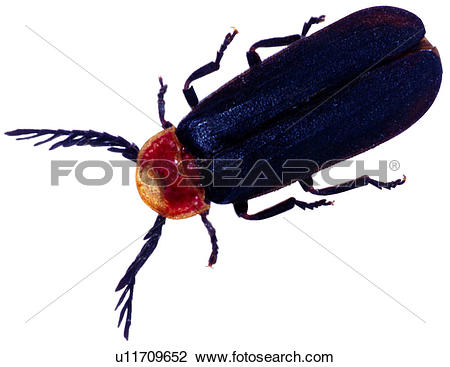 Stock Photo of bugs, arthropod, insects, bug, worms, insect.