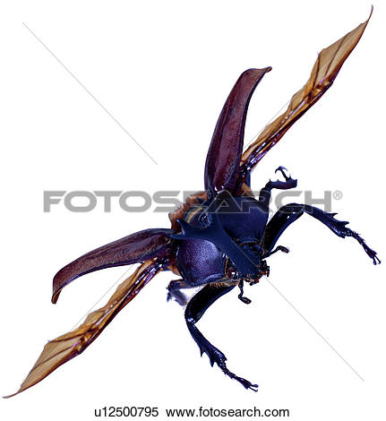 Stock Image of insects, worm, worms, bugs, insect, coleoptera.