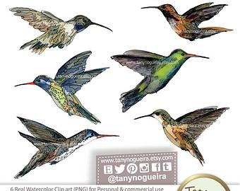 Colibri clip art.