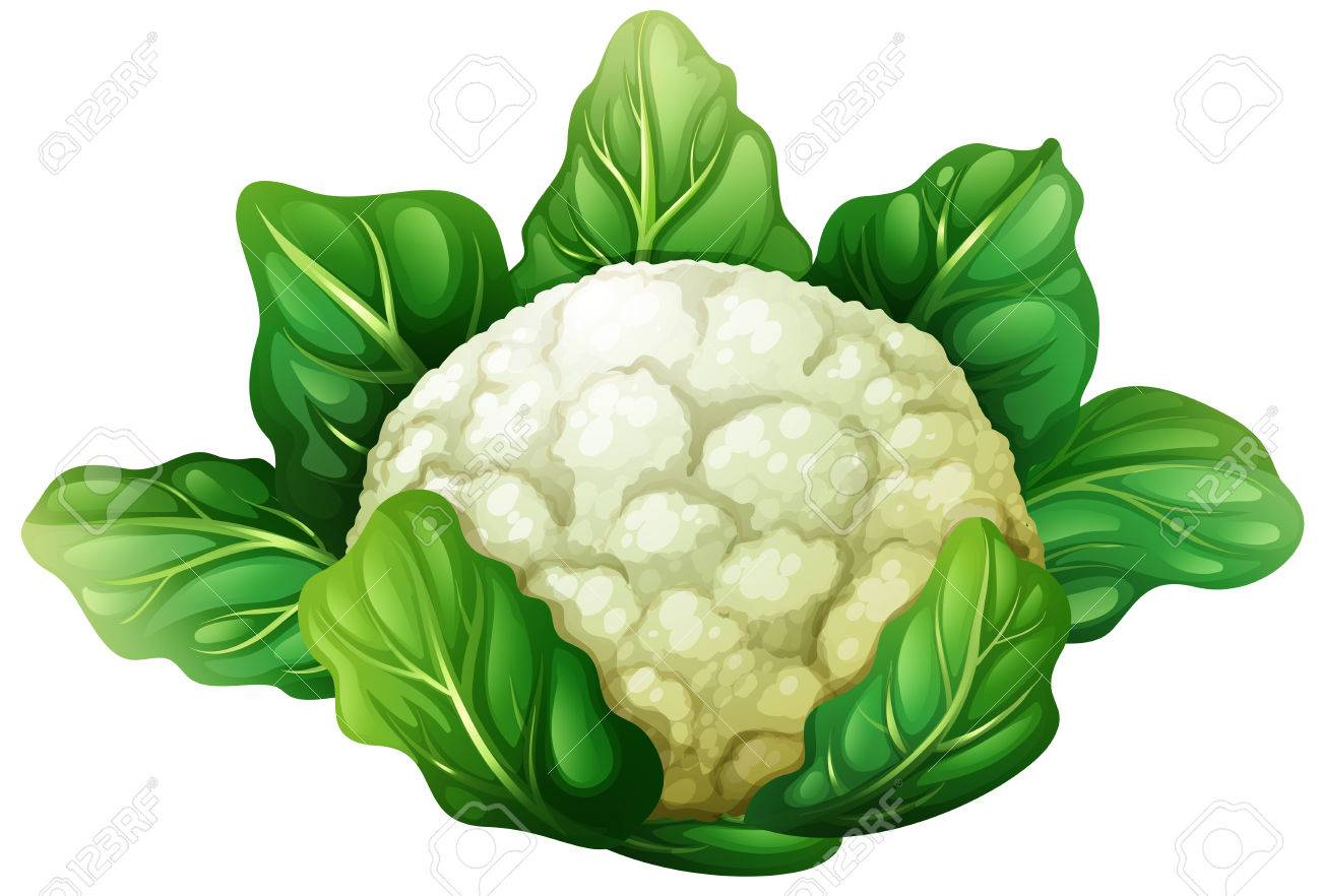 Cauliflower with green leaves illustration.