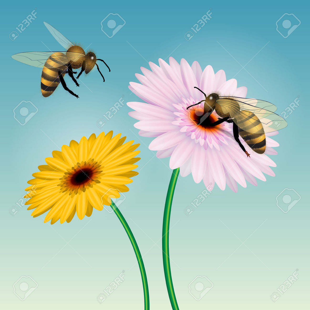 Honey Bee Collecting Nectar On A Flower. Isolated On White. Vector.