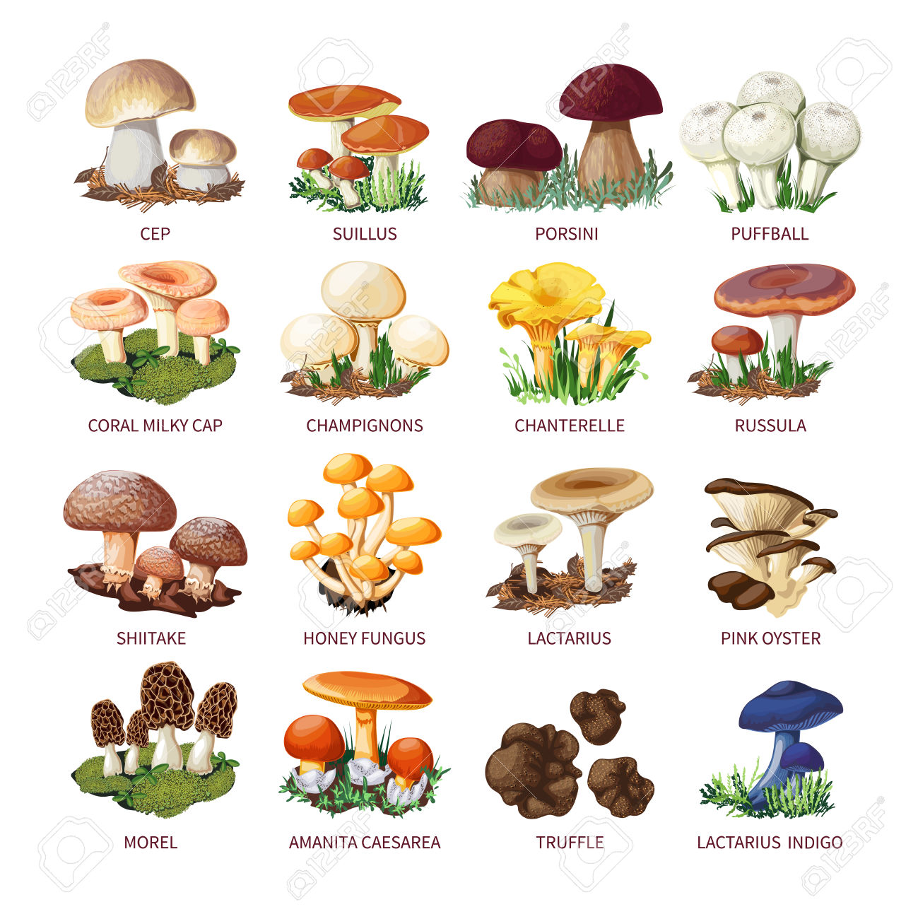 Colorful Forest Wild Collection Of Assorted Edible Mushrooms.
