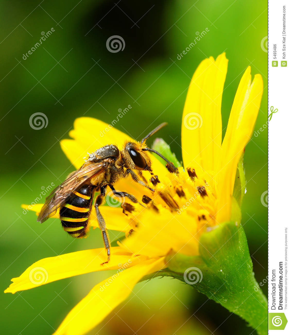 Bee At Work Collecting Nectar Royalty Free Stock Image.