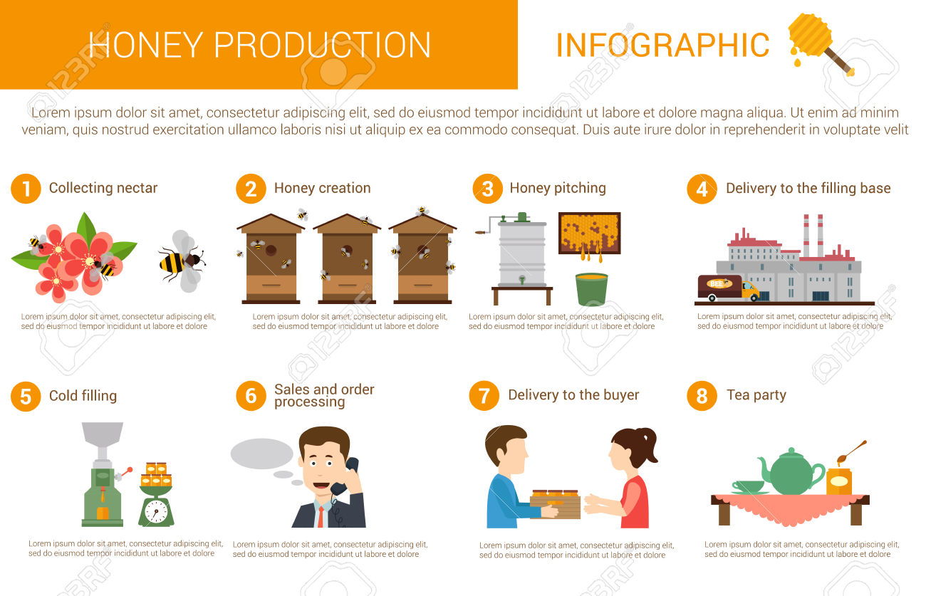 Honey Production Process Stages Or Steps In Infographic Form.