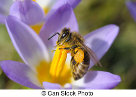 Nectar Stock Photos and Images. 23,734 Nectar pictures and royalty.