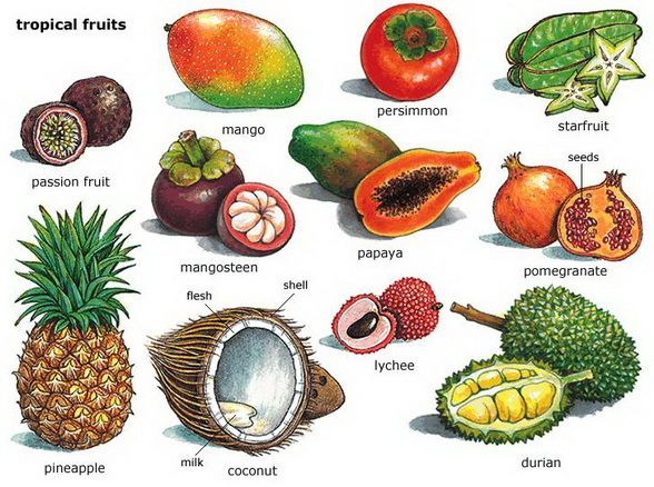 Collective nut fruit clipart #20