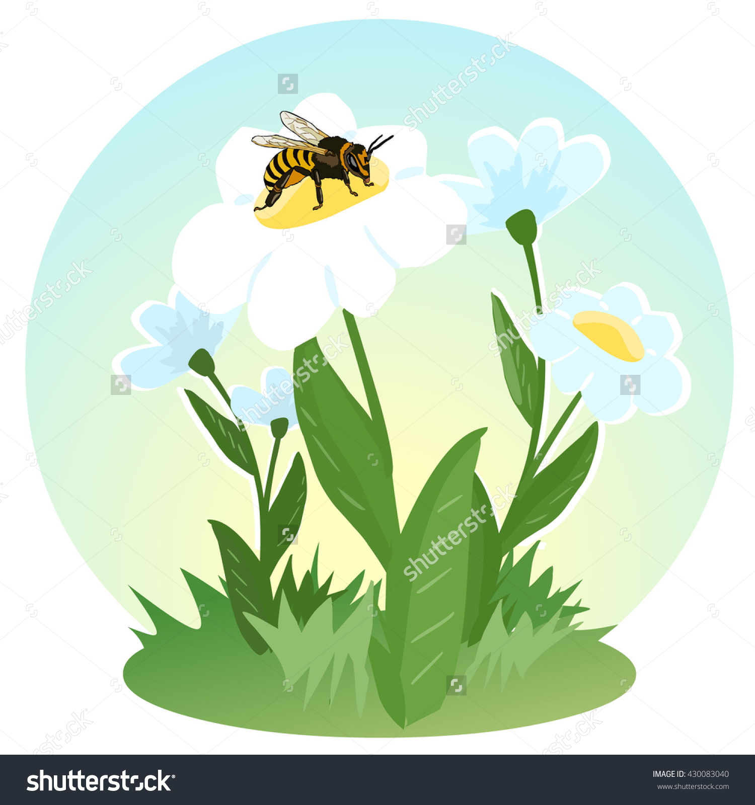 A Bee Collects Nectar On The Flowers. Life Of Flying Insects.