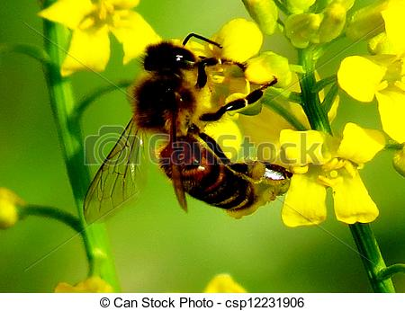 Stock Photography of The bee collects nectar.