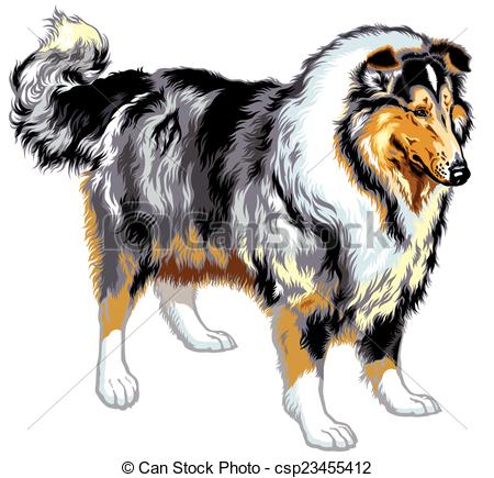 Collie Illustrations and Clipart. 545 Collie royalty free.