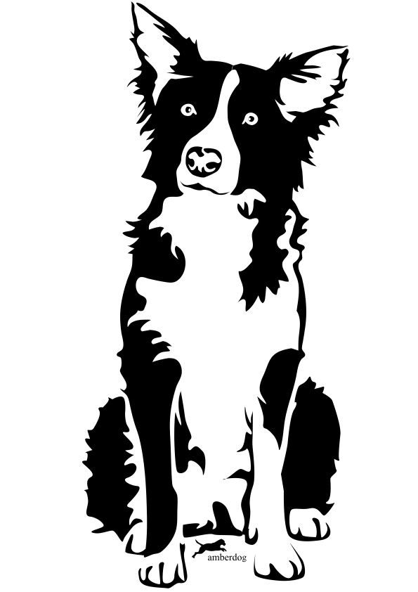 sketch of border collie.