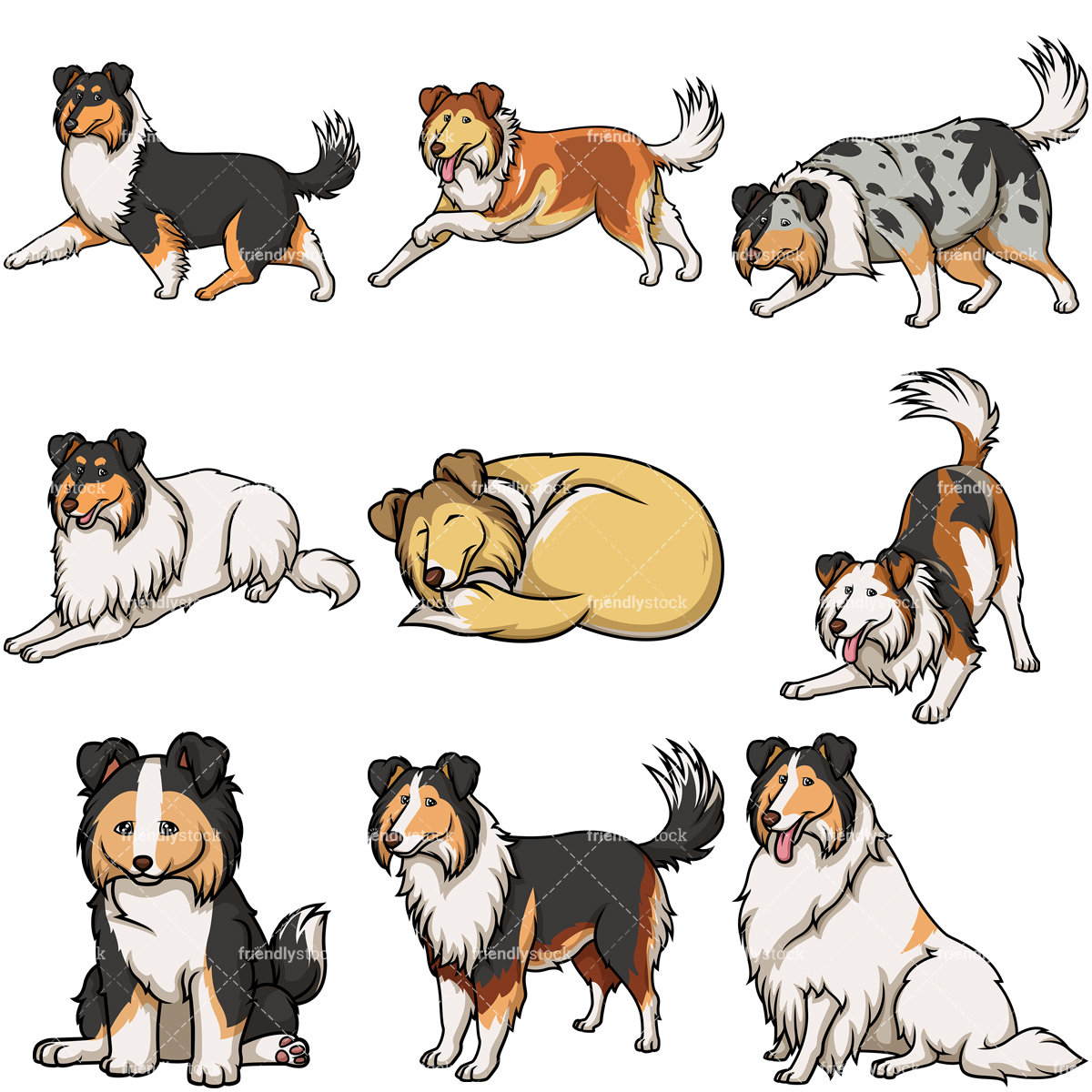 Collie Dogs Collection.