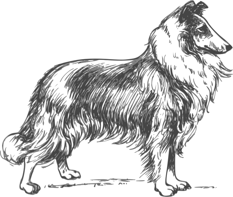 Free Clipart: Collie grayscale.