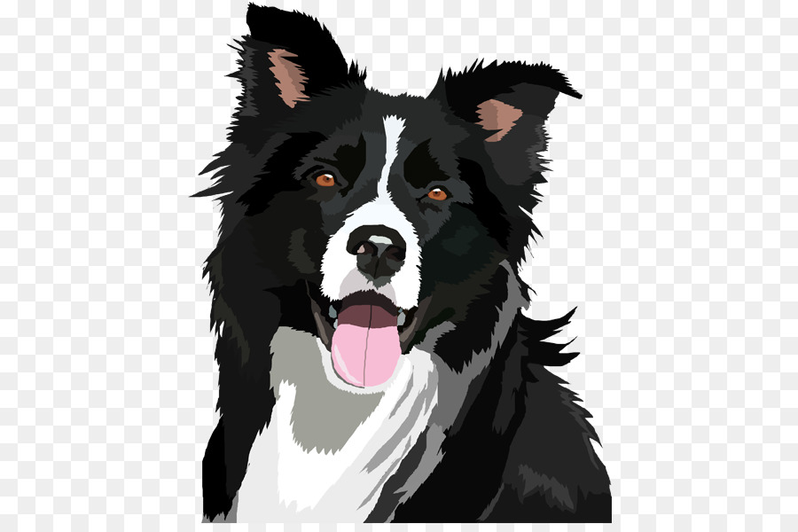 Border Collie png download.