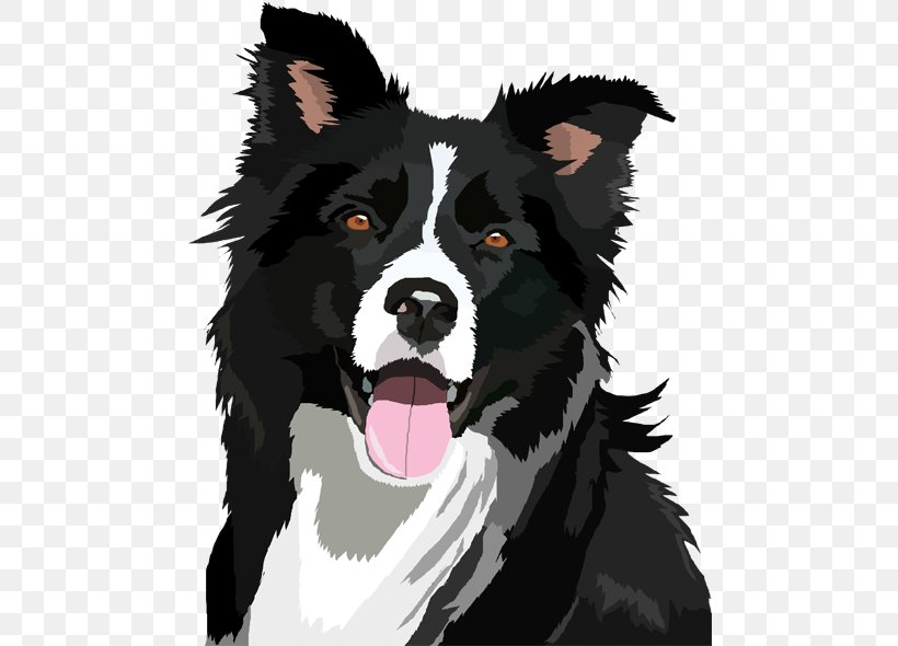 Border Collie Bearded Collie Clip Art, PNG, 481x590px.