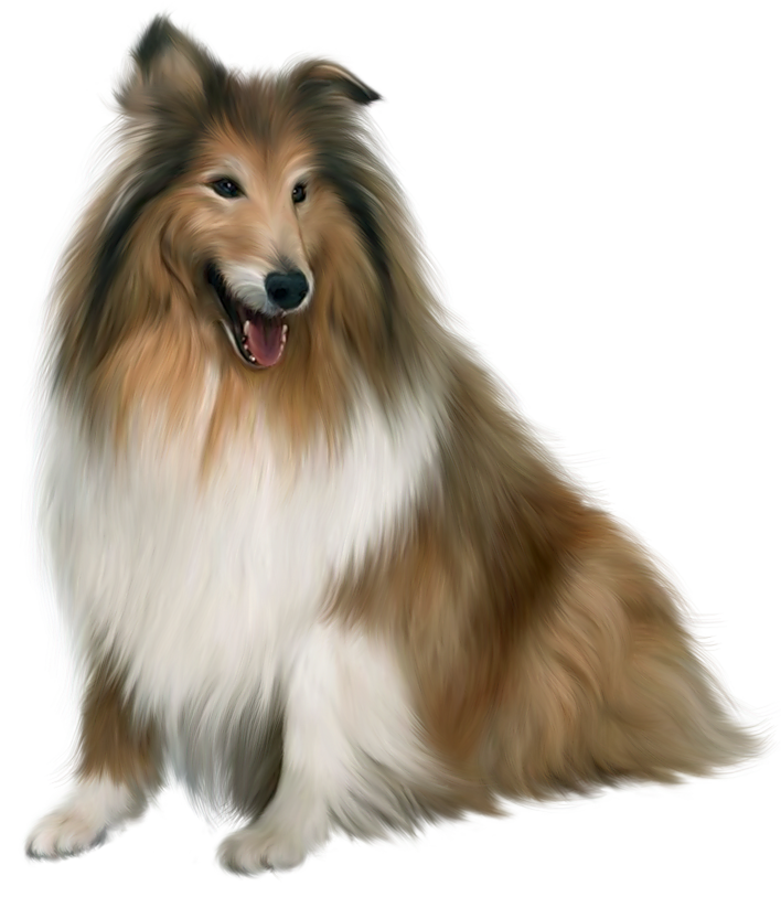 Painted Scotch Collie Dog PNG Picture Clipart.
