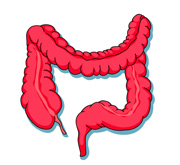 Free Intestine Cliparts, Download Free Clip Art, Free Clip Art on.