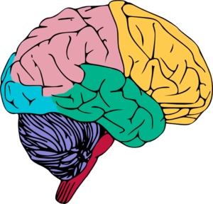Brain Copy.