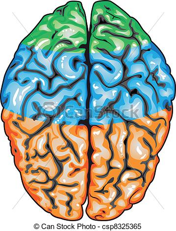 Vector Clip Art of Brain. Top view.