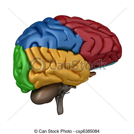 Clip Art of Superior view of the Brain.