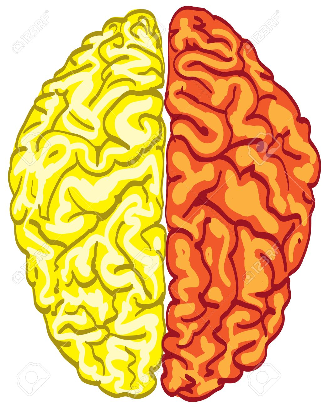 Human Color Brain Isolated.