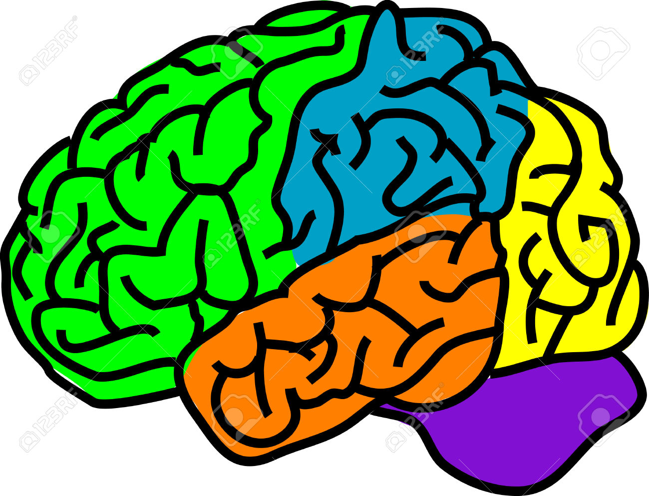 Vector Illustration For A Anatomy Brain In Separate Color Royalty.