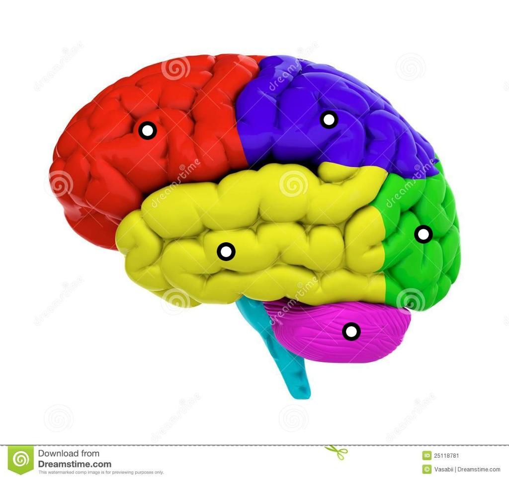 les zones du cerveau.