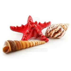 Sea Shells / Beach fillers.