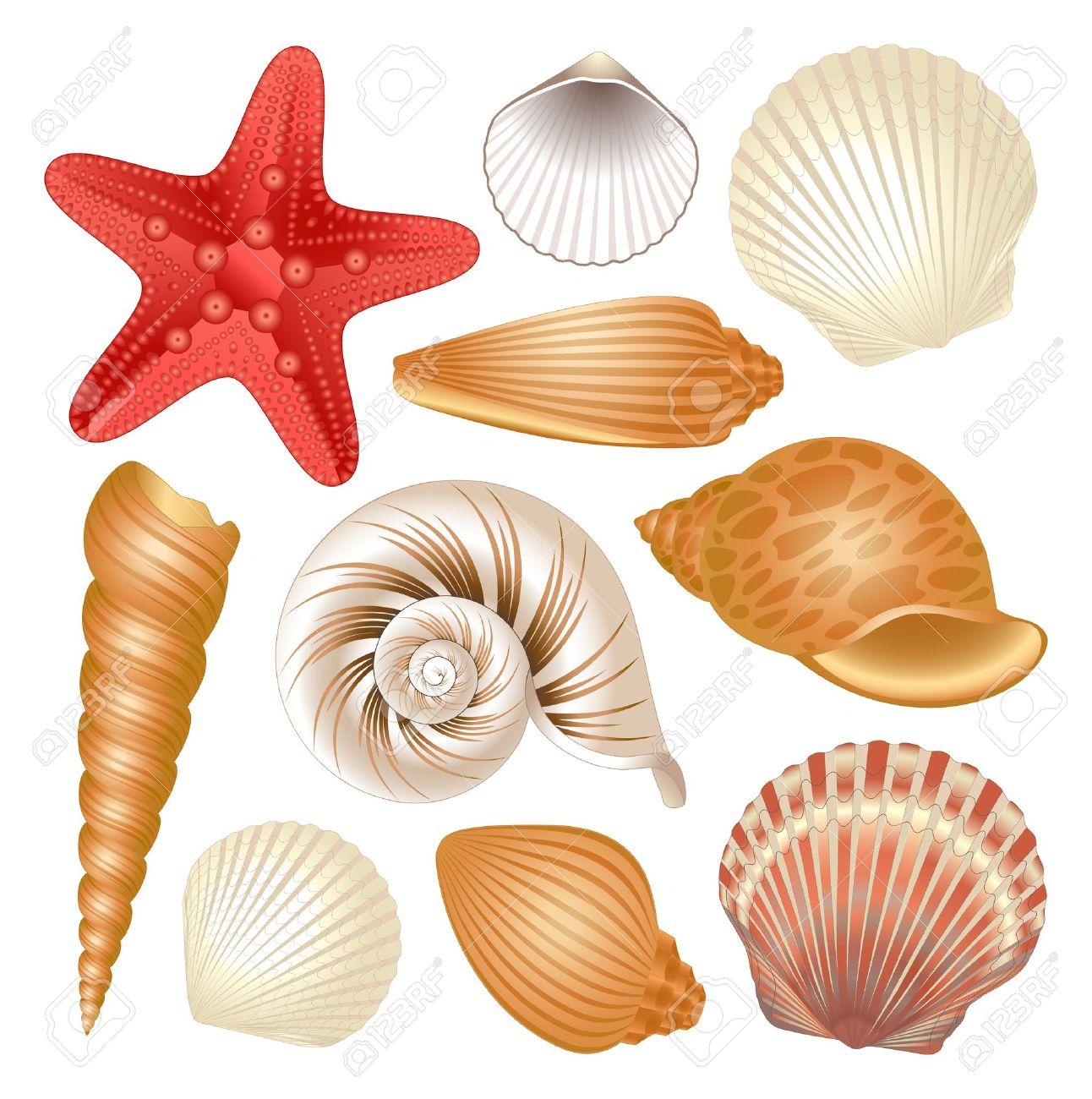 13,706 Seashells Stock Vector Illustration And Royalty Free.