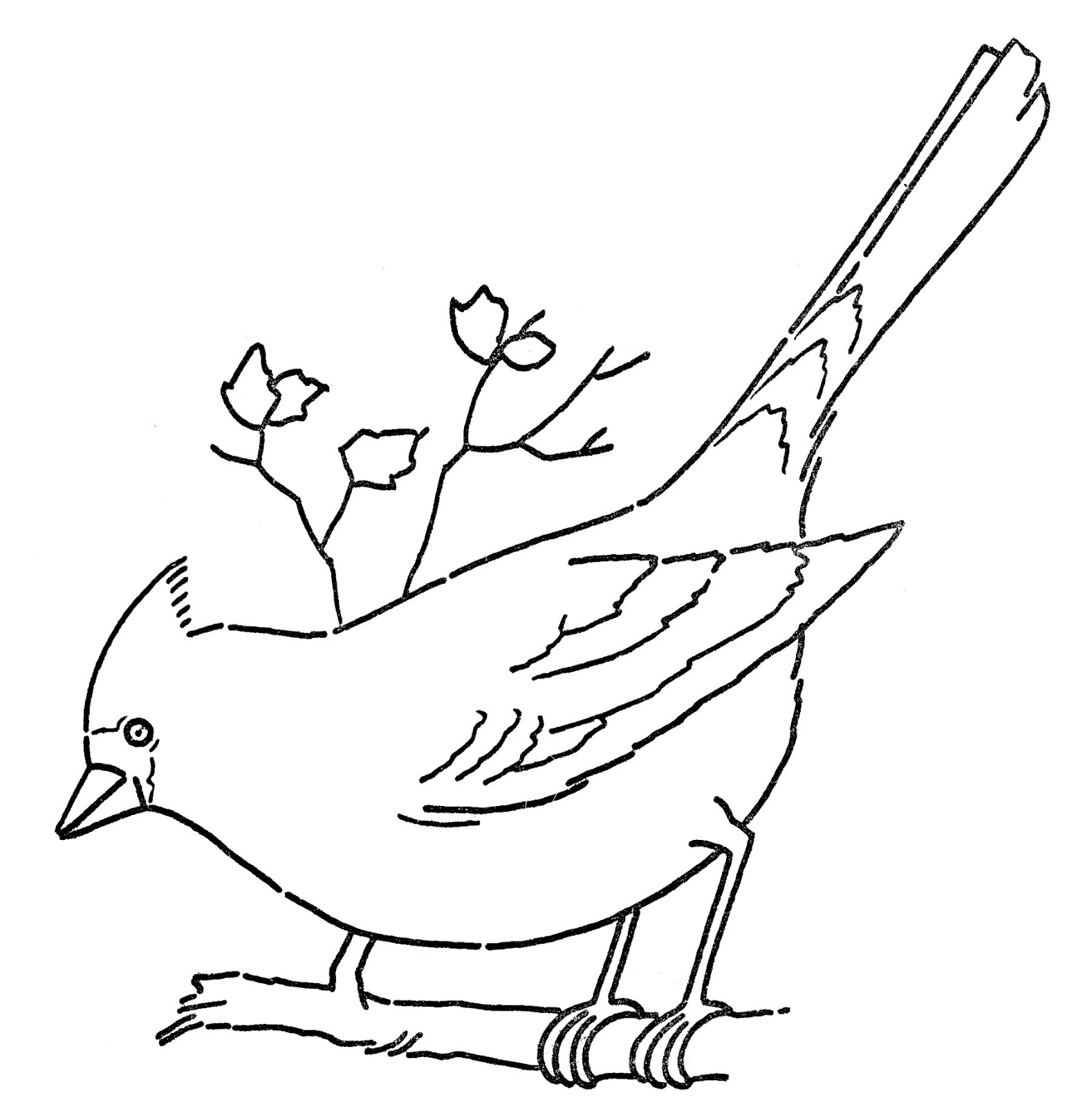 A sketch of a cardinal clipart in color.
