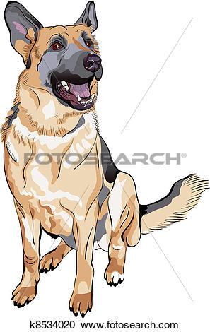 Clipart of vector color sketch dog German shepherd breed k8534020.