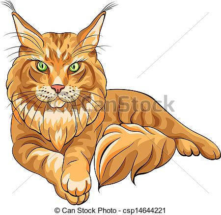 Vector Illustration of Vector color sketch fluffy Maine Coon cat.