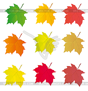 Colorful Leaf Clipart.